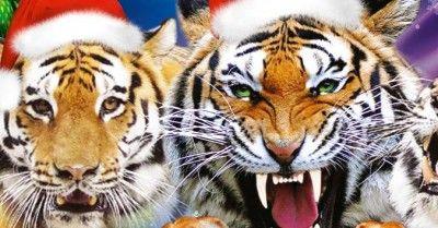 Новогоднее представление «Среди хищников»