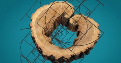 Выставка «Геометрия в природе»