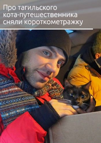 Про тагильского кота-путешественника Графа сняли короткометражный фильм
