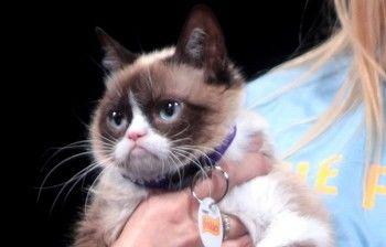 Умерла Grumpy Cat — кошка, ставшая популярным мемом
