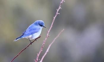 «Начните год с добрых дел». Музей-заповедник запустил юбилейную акцию помощи городским птицам