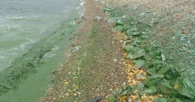Областные и тагильские чиновники выбрали самый дорогой вариант очистки Черноисточинского пруда — за 5 млрд рублей