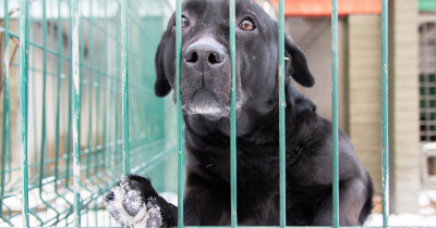 «Никто не заявляется». Мэрия Нижнего Тагила не может найти подрядчика на отлов бродячих собак