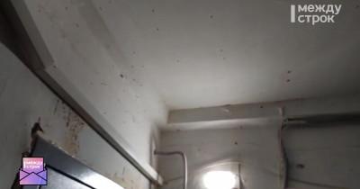 В Нижнем Тагиле жителей дома атаковали гигантские мошки (ВИДЕО)