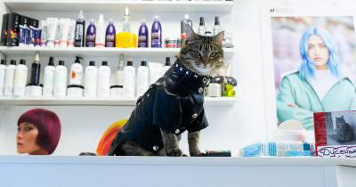 «Каждый день наряжаём её в разные костюмы». В Нижнем Тагиле кошка Дуся из бездомной превратилась в фотомодель, стала «мордой» парикмахерской и любимицей всей округи