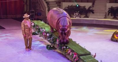 Бегемот, шимпанзе и дикобраз-альбинос. Уникальное шоу с экзотическими животными покажут в Нижнетагильском цирке этой осенью
