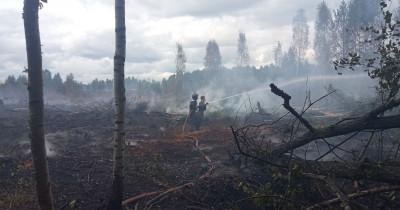 Greenpeace предложил помощь властям Свердловской области в тушении торфяных пожаров