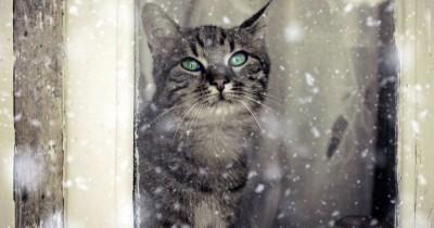 На этой неделе жителей Нижнего Тагила ждут дожди со снегом и холодные ночи