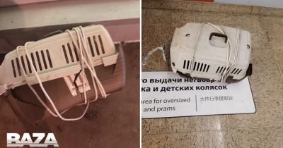 В самолёте «Аэрофлота» умерли две кошки во время перелёта из Нью-Йорка в Москву