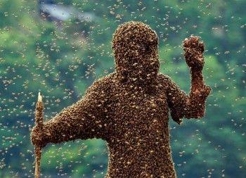 «Доктора извлекли из головы 15 пчелиных жал». Инспекторы ГАИ спасли уральца после атаки пчёл