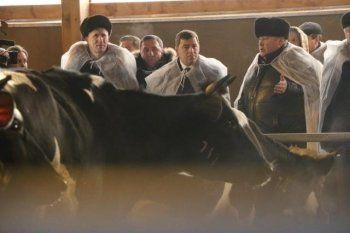 Фермеры Пригородного района просят губернатора и Минсельхоз защитить их от мести соратника экс-мэра Тагила Диденко. «Угрожает вырезать 200 коров, молоко которых мы продаём на завод Danon»