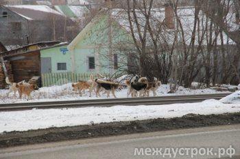 Конкурс на отлов бродячих собак в Нижнем Тагиле вновь выиграла скандально известная фирма из Артёмовского