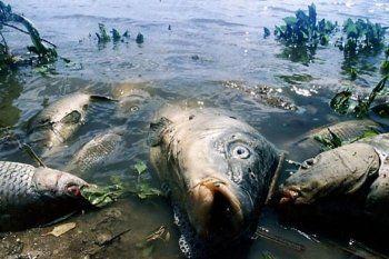 Прокуратура завела дело по некачественной воде в Нижнем Тагиле