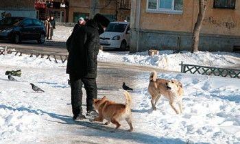 На Вагонке покусавшая ребёнка и растерзавшая той-терьера свора собак снова напала на людей