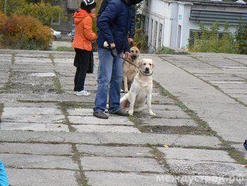 С собакой жить - на семинары ходить