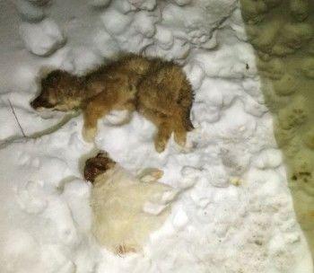 Полиция Нижнего Тагила проверяет приют для животных, где обнаружены трупы собак
