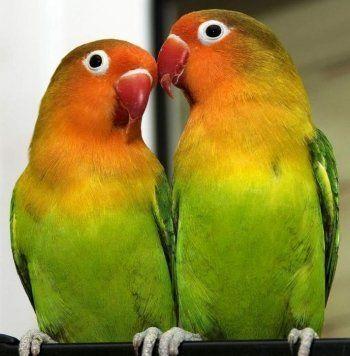 В Нижнем Тагиле бомжа будут судить за кражу попугаев