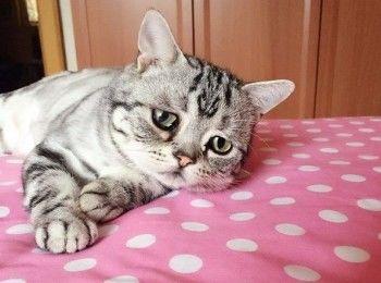Жителям Нижнего Тагила грозит 5 лет за хищение 15 килограммов кошачьего корма