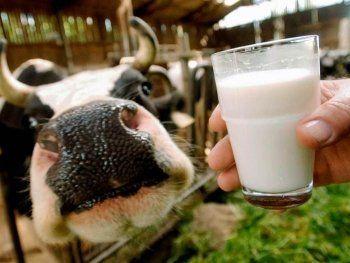 Россельхознадзор нашёл в российском молоке гипс, мел и кислоту