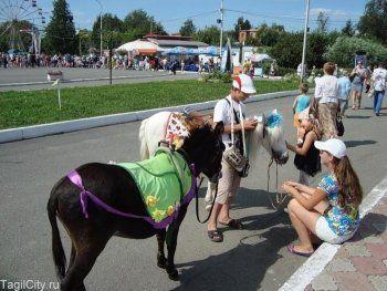 Мэрия Нижнего Тагила запретила катания на животных возле парка имени Бондина. Список разрешённых зон