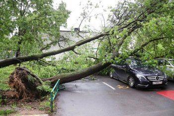 Ущерб от московского урагана «Росгосстрах» оценил в 25 миллионов рублей