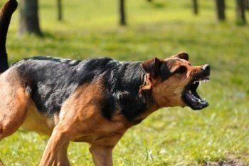 9 мая в Нижнем Тагиле бездомная собака покусала девушку
