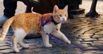 Правительство планирует ввести обязательную платную регистрацию домашних животных