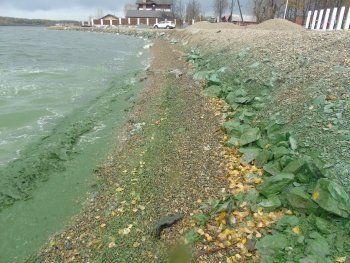 После сюжета Первого канала о зелёном Черноисточинском водохранилище прокуратура начала проверку