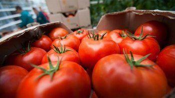 «Коммерсантъ» узнал о возможном возобновлении импорта помидоров из Турции в начале октября