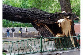 В Москве жертвами урагана стали 11 человек