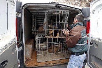 Депутаты Госдумы предложили ужесточить наказание за жестокое обращении с животными