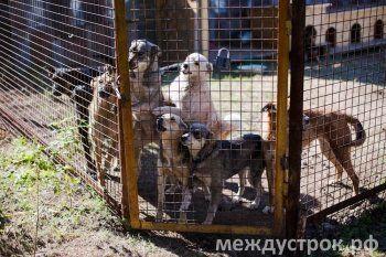 «Собаки с Марса не прилетают». Паспорта, чипизация и налоги: мэрия Нижнего Тагила просит областные власти загнать домашних животных в правовое поле