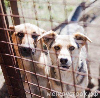 «Директор с замашками догхантера». От фирмы, выигравшей конкурс на отлов бездомных собак в Нижнем Тагиле, отказались в соседних городах