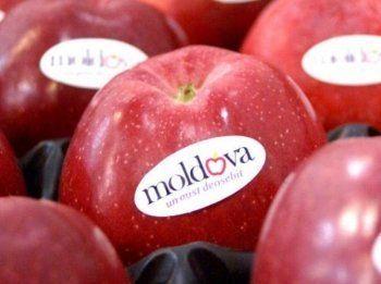 Россия запретила ввоз молдавских овощей и фруктов через Белоруссию