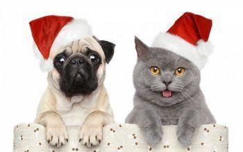 Котики в опасности! Как защитить домашнее животное в новогодние праздники