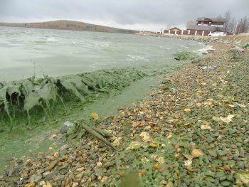 Руководство «Водоканала-НТ» прокомментировало зелёную воду в Черноисточинском пруду