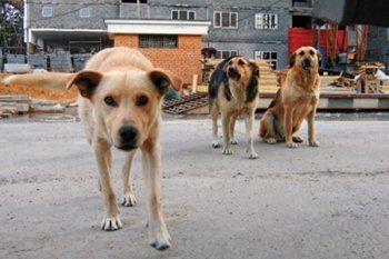 Мэрия Нижнего Тагила разыграла конкурс для догкиллеров. Отловом 400 безнадзорных собак займётся бизнесмен, подозревавшийся в жестоком обращении с животными