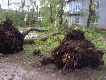 Мэрия Нижнего Тагила потратит на уборку поваленных ураганом деревьев 34 миллиона рублей
