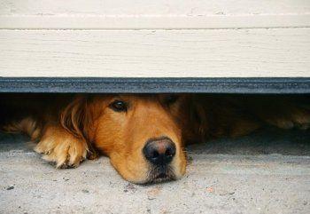 «Бесят такие твари! Уж если взял животное - ухаживай за ним». Тагильчане ищут хозяина запертой в гараже собаки