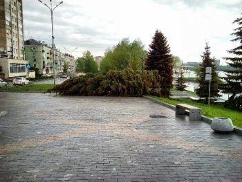 Ураган повалил в Нижнем Тагиле около 2500 деревьев