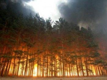 Сезон горящих лесов в Свердловской области открыт