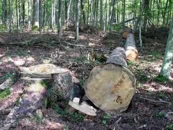 Космомониторинг на страже деревьев