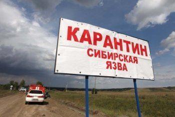 На Ямале число госпитализированных из-за вспышки сибирской язвы выросло до 90 человек