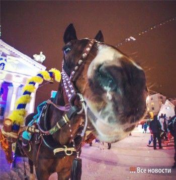 На Театральной площади испуганная лошадь покалечила тагильчанку