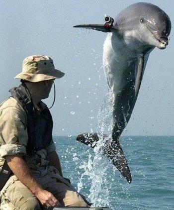 Министерство обороны РФ закупает черноморских дельфинов для службы