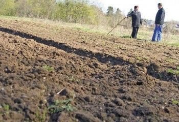 Минэкономики ужесточит наказания для недобросовестных землевладельцев