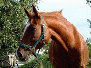 В Нижнем Тагиле произошло курьезное ДТП с участием лошади