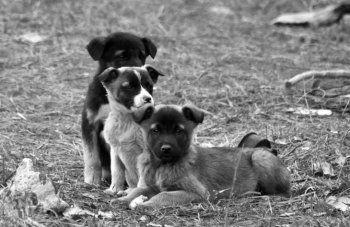 Мэрия Нижнего Тагила подала заявку на «гуманный отлов и утилизацию» 400 бездомных собак