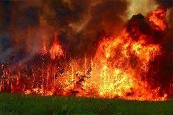 В Нижнем Тагиле вспыхнули два лесных пожара