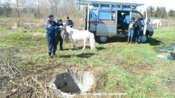 В Нижнем Тагиле спасатели достали из колодца пони